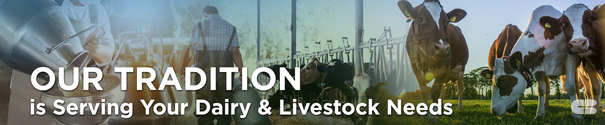 dairy and livestock